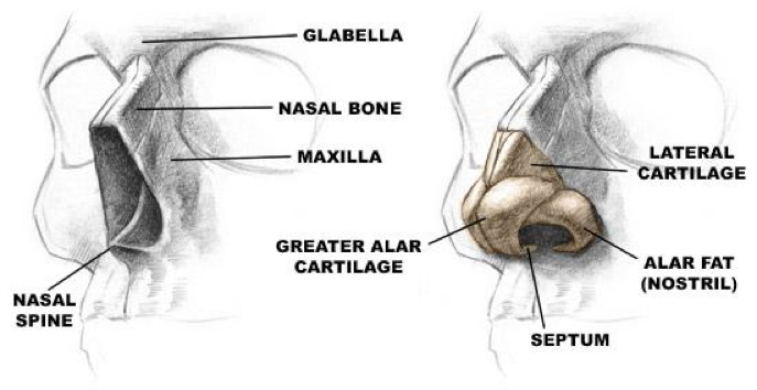 nasal-fracture-treatment